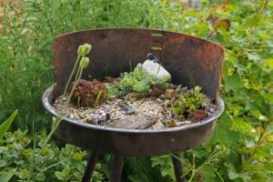 Blick auf den Kohlegrill bepflanzt mit Sedum