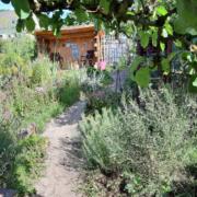 Blick durch den Apfelbaum zur Gartenlaube Juli 2020