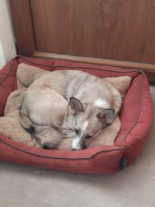 unser dritter Hund Foxi