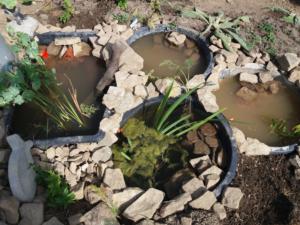 Wasserpflanzen in den Speißfässern