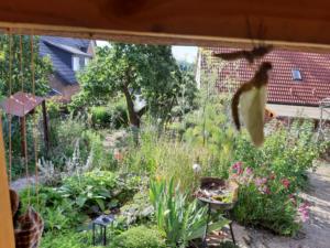 frisch geschlüpfte Libelle unterm Laubendach mit Blick auf Wasserlandschaft