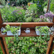 Blick auf die Fensterbank mit bepflanzten Blumentöpfen
